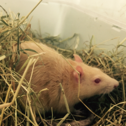 Rat Rescue Image 1